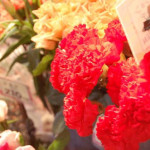 母の日のカーネーションの色はどうする?花言葉や由来は?
