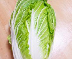 白菜の見分け方 外葉がしっかり巻いている