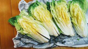 白菜を長持ちさせる保管方法 新聞紙